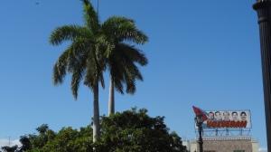 propagande et palmier