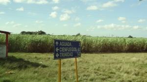 signpost pour cienfuegos et trinidad avec cannes à sucre