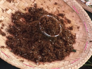 ants, a Shan source of proteins
