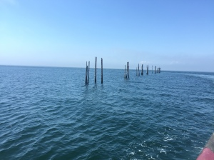 Herring Traps on Grand Manan Island